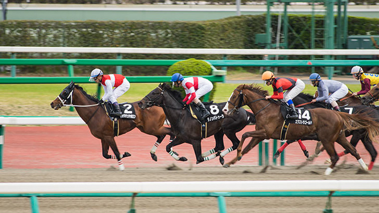 競馬のレース画像